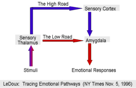 Emotional Pathways