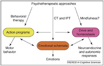 Cognition, emotion and behavior interact with each other in complex ways.